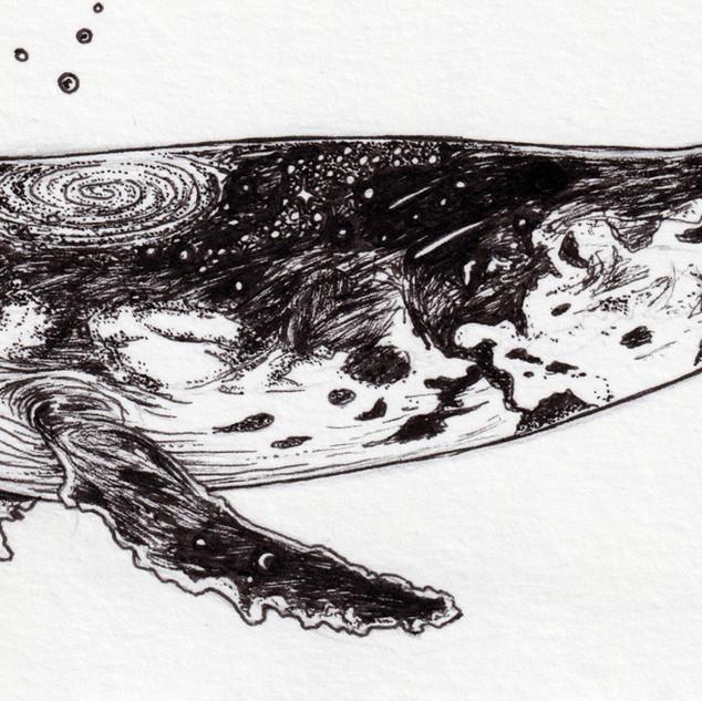 2019_073 whale face 2.jpg