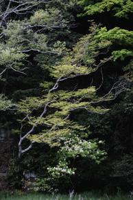 20180502_MG_0611-Canon EOS 70D-Sendai.jp