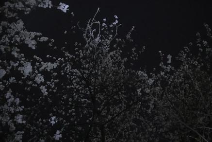 20190328IMG_9989-Canon EOS 200D-Platte_K
