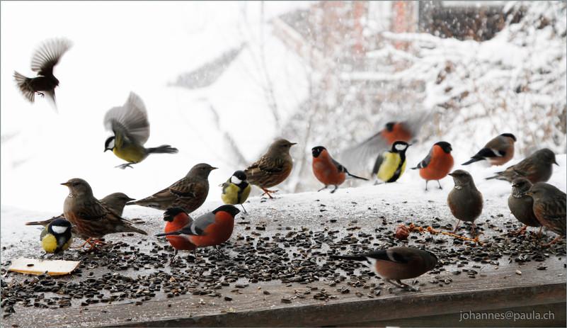 Birdland3PrintA4.jpg