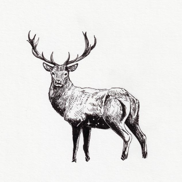 2019_055 Deer.jpg