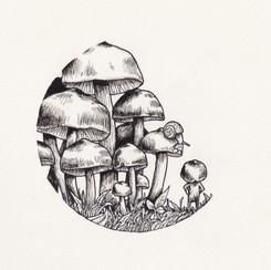 2017_03 Mushrooms.jpg