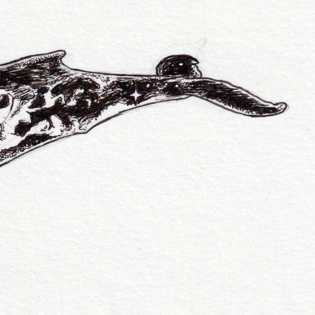 2019_073 whale face 3.jpg