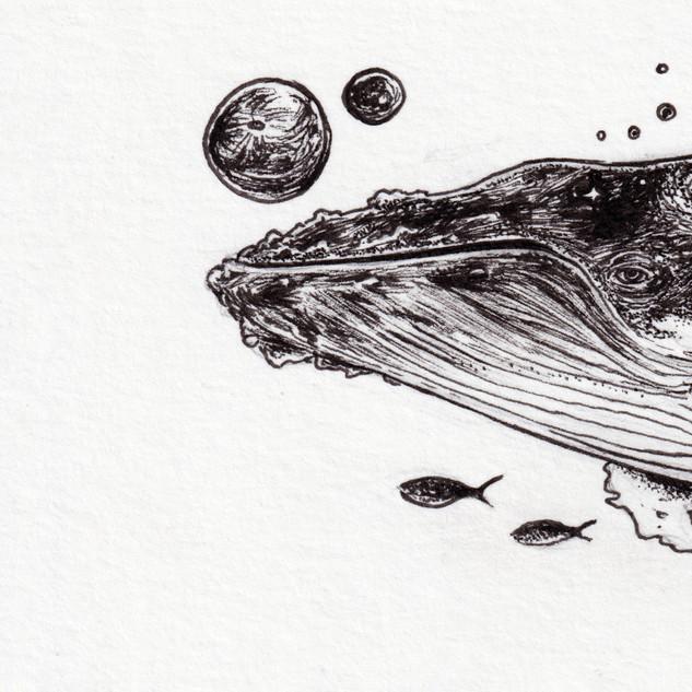 2019_073 Whale 1.jpg