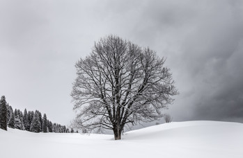 20180307IMG_8551Braunwald_Kneugrat.jpg
