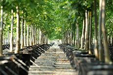 TreeTown USA growing grounds