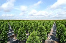 TreeTown USA growing ground Glen Flora Texas