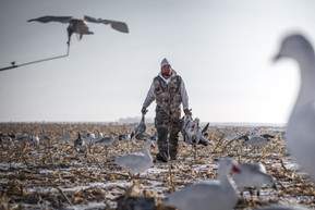 Snow Goose hunt in North Dakota