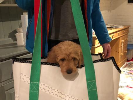 Puppy Shoulder Bag