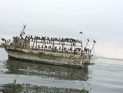 A ghostly boat on the way to Ballestas Island (Paracas, Peru)