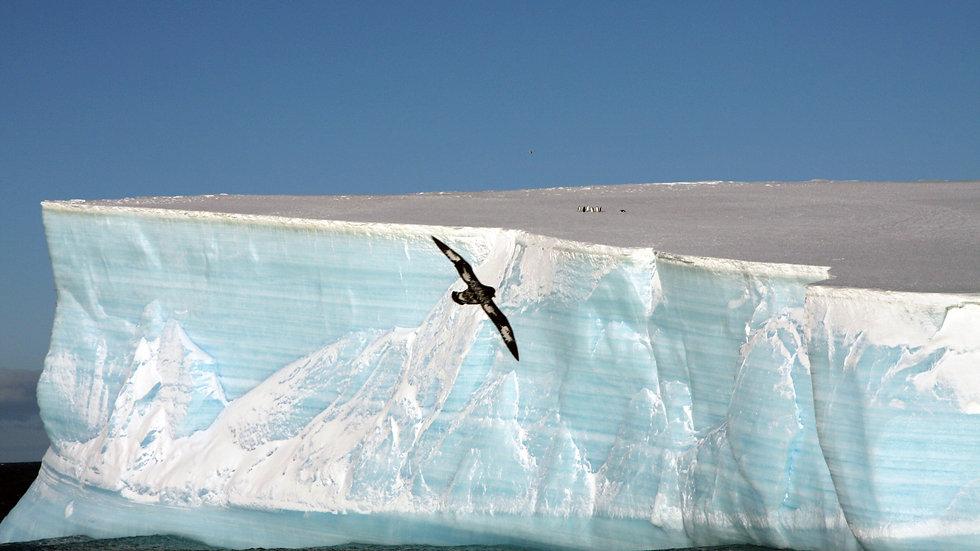 First Iceberg, Antarctica