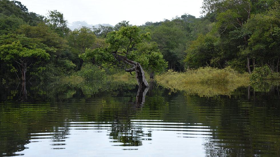 Scenery, Amazon