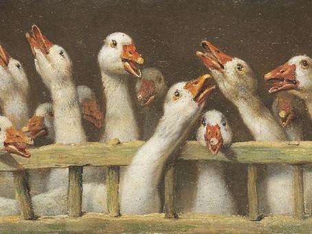 Patos y lobos: Devolvamos la política al mundo de las ideas