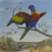 Rainbow Lorikeet 01.jpg