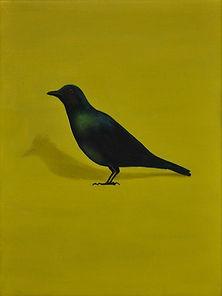 Glossy Starling 01b.jpg