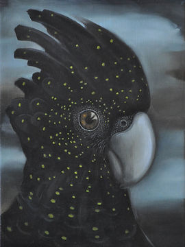 Red Tailed Black Cockatoo 01.jpg