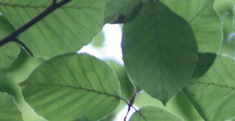 branch-green-greenery-72509.jpg