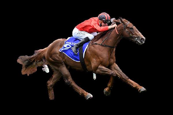 Horse-dosh-157262-750x500.jpg-removebg-p