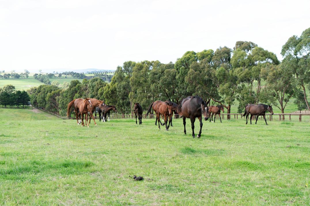 Mares & Foals .jpg