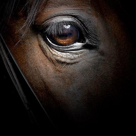 horse-eye_1746934i.jpg