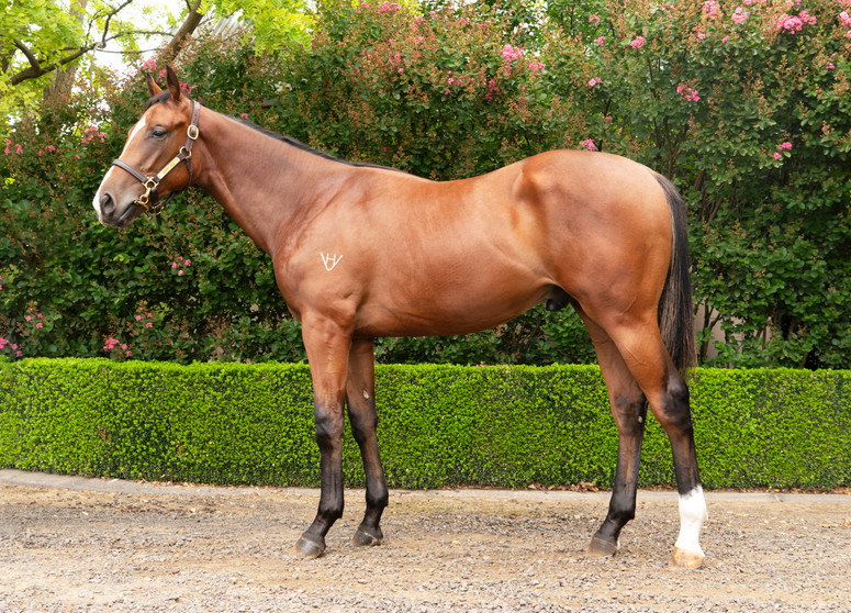 LOT 375 REAL IMPACT PROTRACTED COLT.jpg