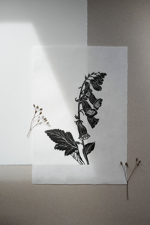 Foxglove Lino Print