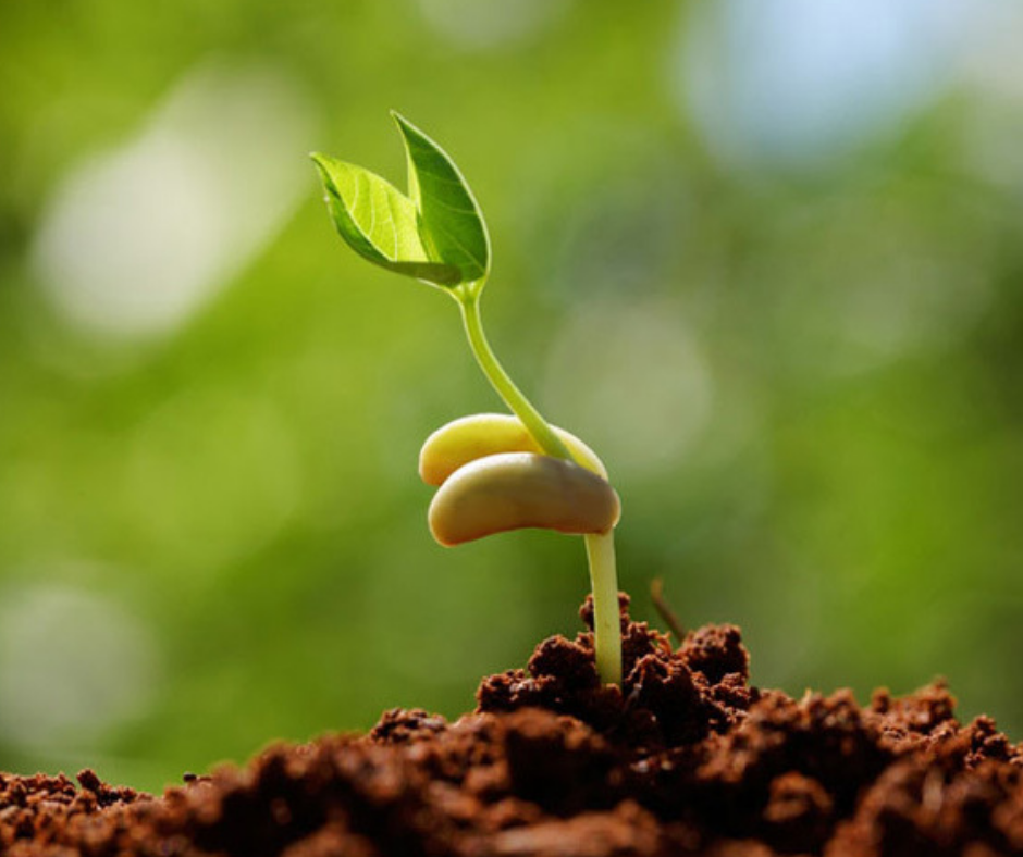 sustainable agriculture zaoinvest