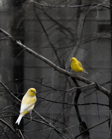 yellow%20bird%20on%20tree%20branch_edite