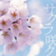 sakura_saku_24068.jpg