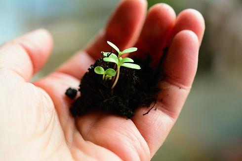 plant-4036130.jpg