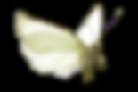 papillon-ok-D.png