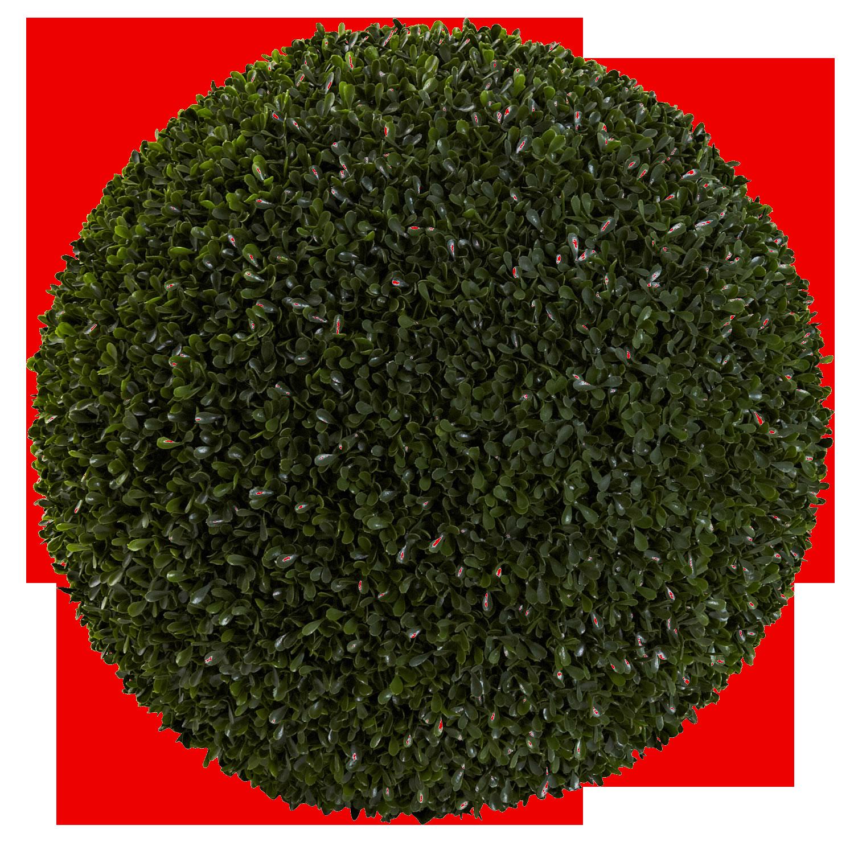 Ehretia Ball Shape Plant