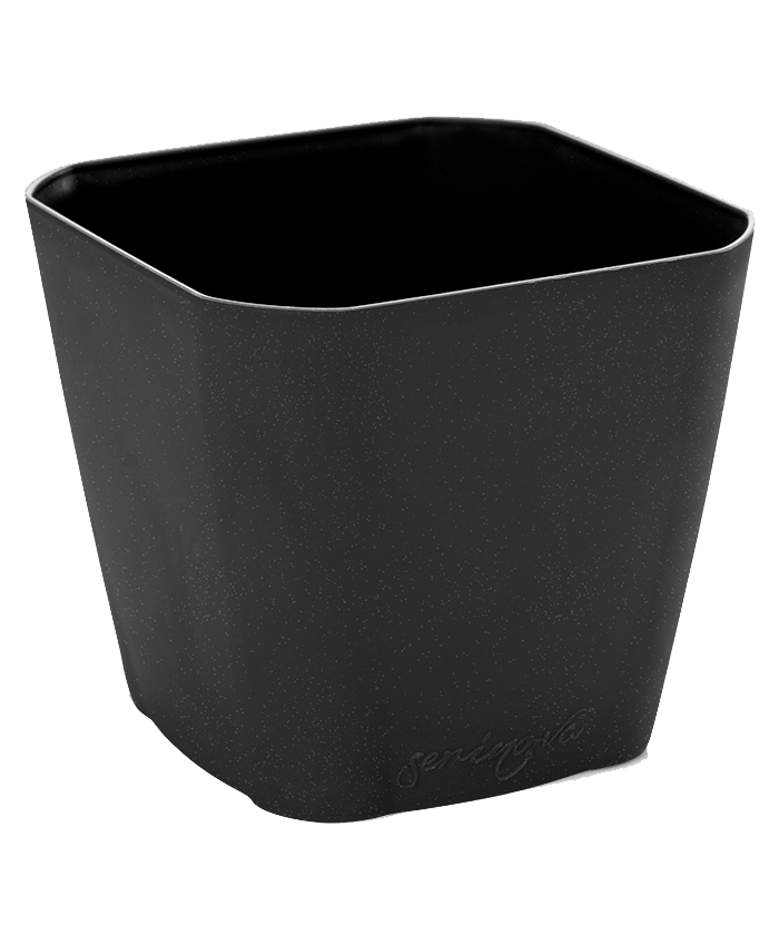 Square Black Plastic Pot
