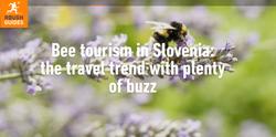 Bee Tourism Slovenia Rough Guides