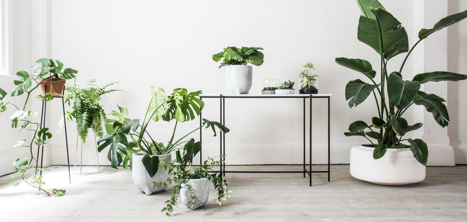 Botanica White 5a.jpg