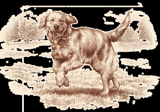 natural-choice-dog.png