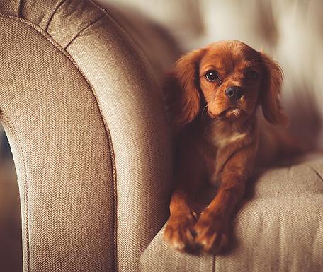 AATU 犬用ドライフード