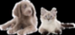 img_read_catanddog.png