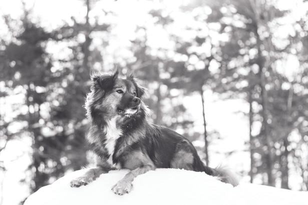 Foster from halifax, Nova Scotia-BW.jpg