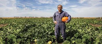 ori-ca-fri-pumpkin-1903x832.jpg