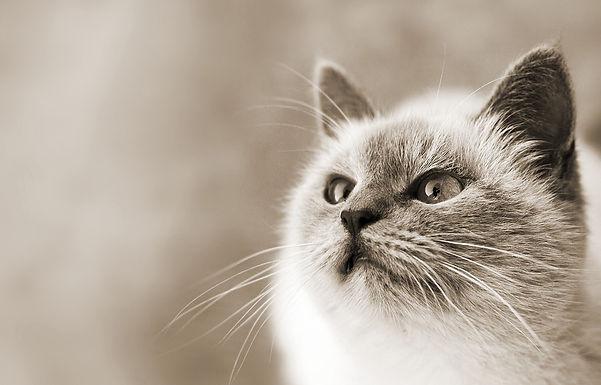 AATU 猫用ドライフード