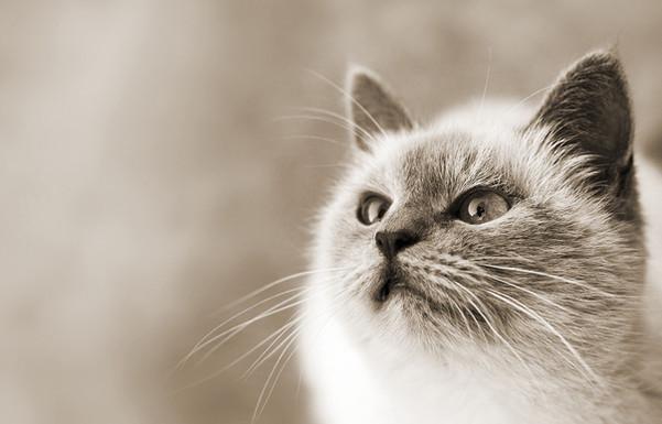 AATU/Cat
