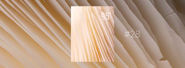 n°28 - les champignons.png