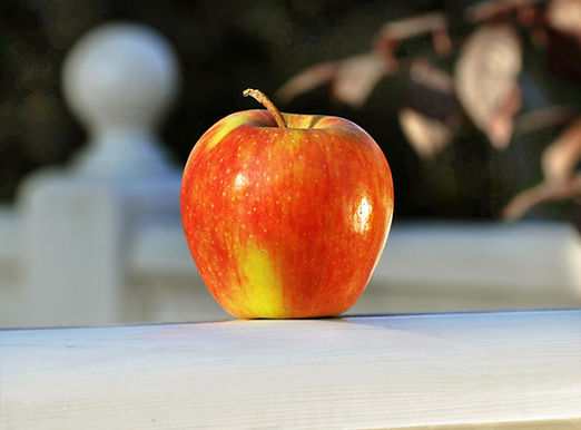 Champion apple by Green Farm for export