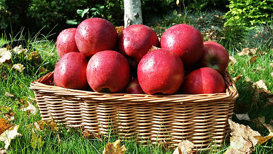 Jonagold apple by Green Farm for export