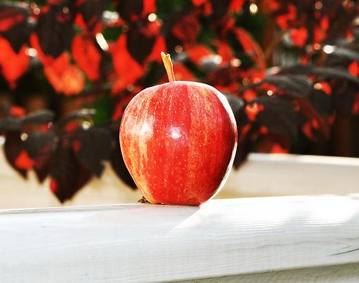 Royal Gala, Gala Shniga apple by Green Farm for export