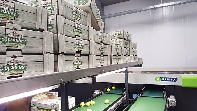Packing house of Green Farm, export of premium apples