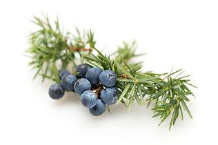 sedona juniper trails health and healing