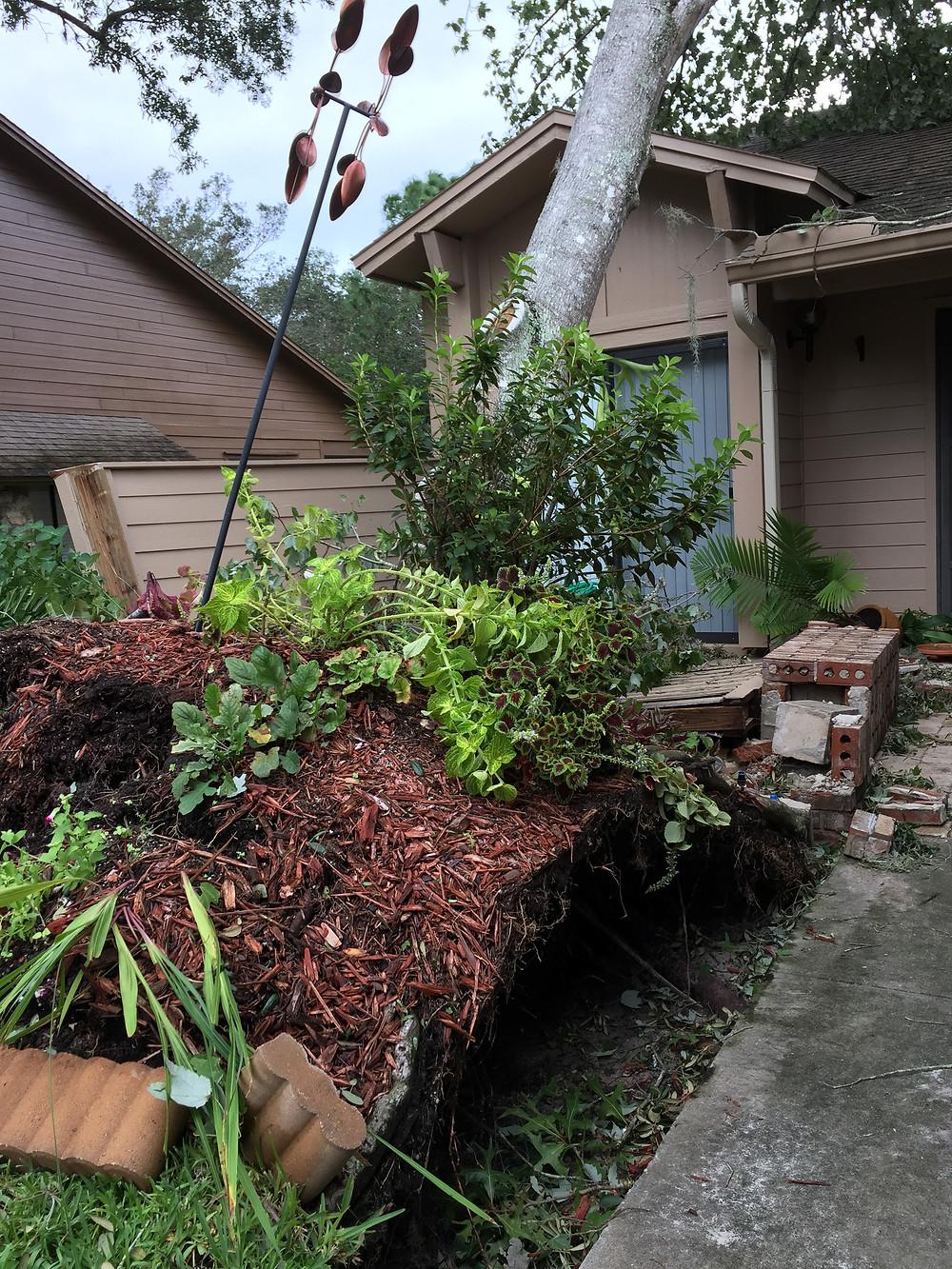 """Grandma's garden"" after hurricane."