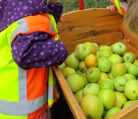 Äpfel_pflücken_6_____So_viele_Äpfel!.